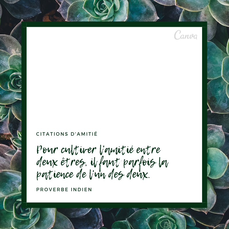 Citations Sur L Amitié Uniques Et Originales En Images Canva