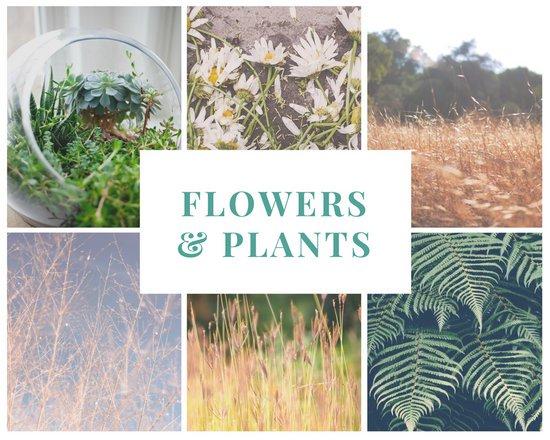 Шаблон коллажа из фотографий цветов и растений