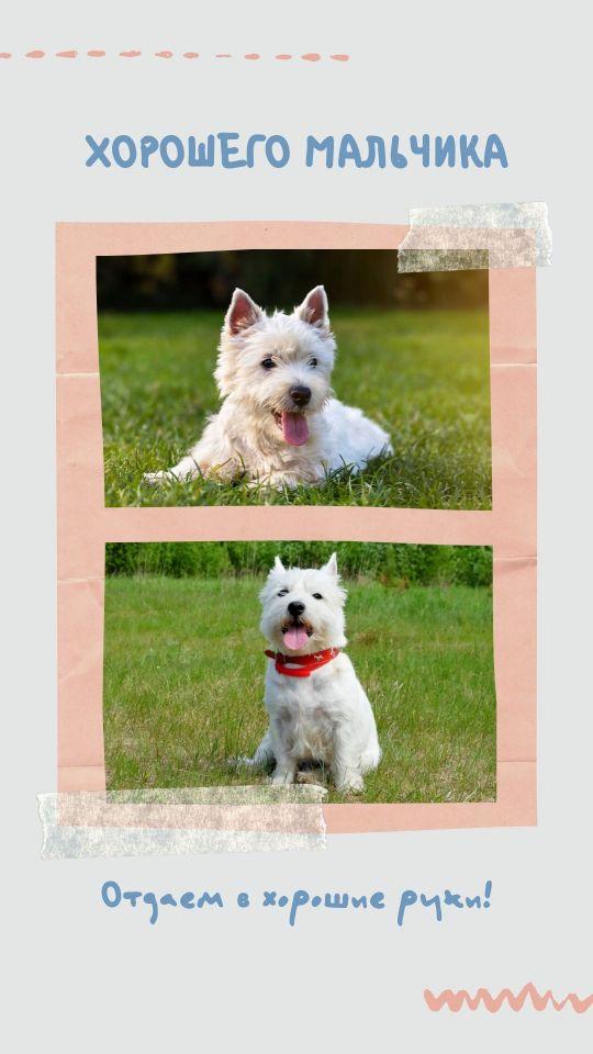 Серая Ваша история с фотографиями собак в текстурной рамке