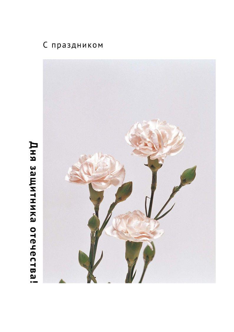 Минималистичный плакат на 23 февраля с гвоздиками