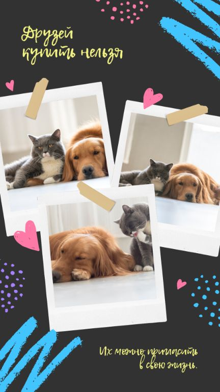 Шаблон истории ВК с фото домашних животных